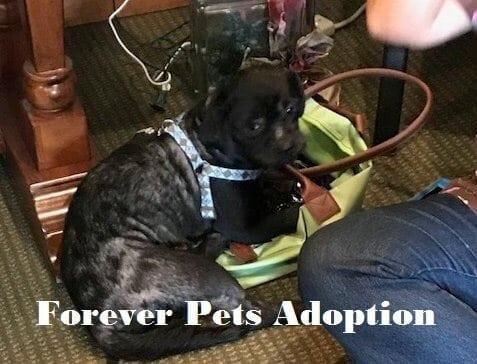 CSI Client Helps Forgotten Pets